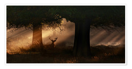 Poster  The silhouette of a Roth Irschs, Cervus elaphus, in the morning in the autumn mist - Alex Saberi