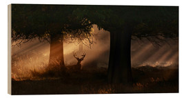 Legno  The silhouette of a Roth Irschs, Cervus elaphus, in the morning in the autumn mist - Alex Saberi
