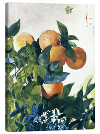 Stampa su tela  Oranges on a Branch - Winslow Homer