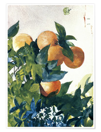 Poster Premium  Oranges on a Branch - Winslow Homer