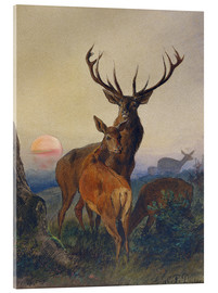 Stampa su vetro acrilico  A Stag with Deer at Sunset - Charles Jones