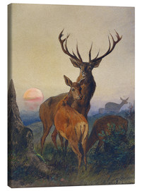 Stampa su tela  A Stag with Deer at Sunset - Charles Jones