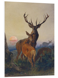 Stampa su schiuma dura  A Stag with Deer at Sunset - Charles Jones