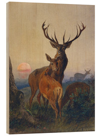 Stampa su legno  A Stag with Deer at Sunset - Charles Jones