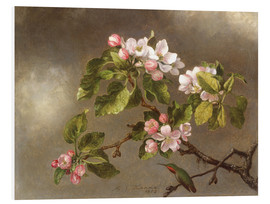 Stampa su schiuma dura  Apple Blossoms and a Hummingbird - Martin Johnson Heade