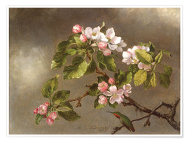 Poster Premium  Apple Blossoms and a Hummingbird - Martin Johnson Heade