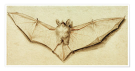 Poster Premium  Bat with spread wings - Hans Holbein d.J.