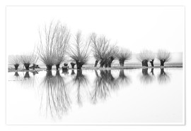 Poster Premium Willow trees in the mirror image of the flood