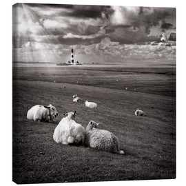 Stampa su tela  Talking Sheep - Carsten Meyerdierks