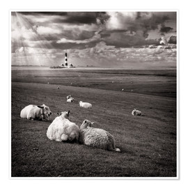 Poster  Talking Sheep - Carsten Meyerdierks