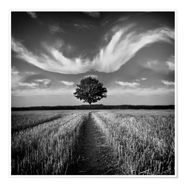 Carsten Meyerdierks - Tree and Clouds