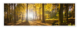 Poster Premium  Autumn forest backlit with sunshine and yellow autumn leaves - Jan Christopher Becke