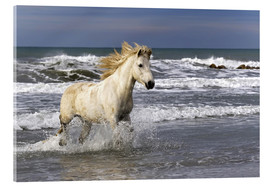 Vetro acrilico  Camargue horse in the surf - Adam Jones