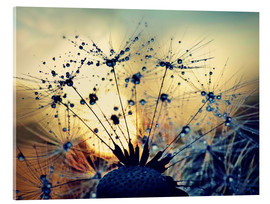 Stampa su vetro acrilico  Dandelion in the sunset - Julia Delgado