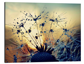 Stampa su alluminio  Dandelion in the sunset - Julia Delgado