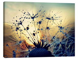 Stampa su tela  Dandelion in the sunset - Julia Delgado