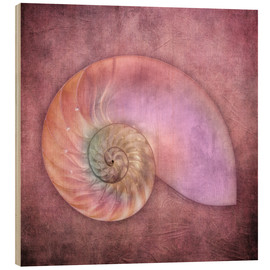Stampa su legno  Sea shell - INA FineArt