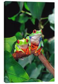 Stampa su tela  Rotaugenlaubfrosch-couple - David Northcott