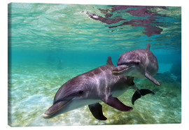Stampa su tela  Two bottlenose dolphins from the beaches of the Caribbean - Stuart Westmorland