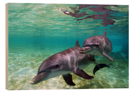 Legno  Two bottlenose dolphins from the beaches of the Caribbean - Stuart Westmorland