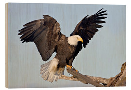 Legno  A bald eagle with outstretched wings - Charles Sleicher
