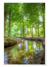 Poster Premium Forest River