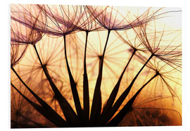 Stampa su schiuma dura  Dandelion in the sunset II - Julia Delgado