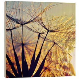 Stampa su legno  Dandelion in the sunset III - Julia Delgado