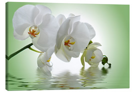 Stampa su tela  Orchid with Reflection - Atteloi
