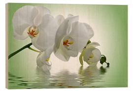Stampa su legno  Orchid with Reflection - Atteloi