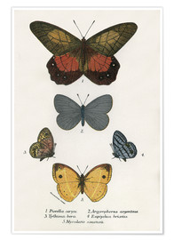 Poster Premium  Butterflies - English School