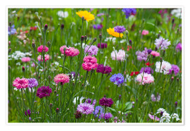 Poster Premium Summer meadow