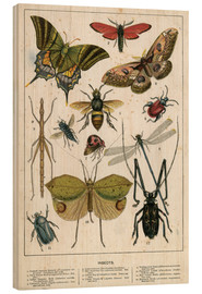 Legno  Insects - English School