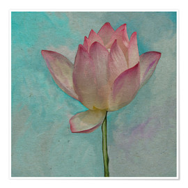 Poster Premium Pink Lotus on Turquoise Blue