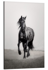 Monika Leirich - Horse Friesian in the steppe