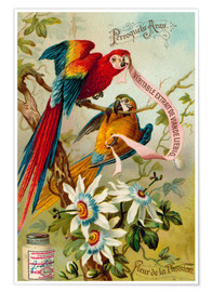 Poster  Pappagalli, are e passionflowers - European School