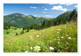 Poster Premium  alpine meadow germany - bildpics