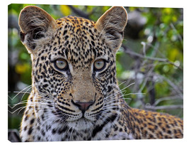 Stampa su tela  The leopard - Africa wildlife - wiw