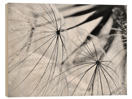 Stampa su legno  Dandelion black and white - Julia Delgado