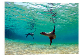 Stampa su schiuma dura  Sea lion lagoon Galapagos Islands - Paul Kennedy