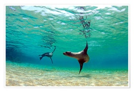 Poster Premium  Sea lion lagoon Galapagos Islands - Paul Kennedy