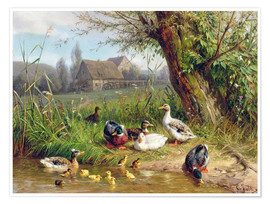 Poster  Mallard Ducks with their Ducklings - Carl Jutz