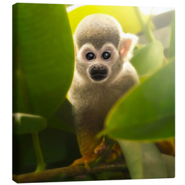 Tela  baby monkey - Photoplace Creative