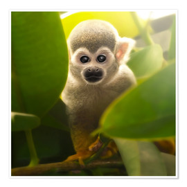 Poster Premium  baby monkey - Photoplace Creative