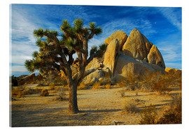 Vetro acrilico  Joshua tree and rock - Charles Gurche