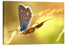 Stampa su tela  Butterfly in late summer - Julia Delgado