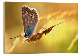 Legno  Butterfly in late summer - Julia Delgado