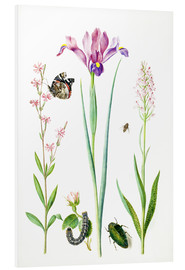 Forex  Red catchfly, rose, iris & orchis - Maria Sibylla Merian