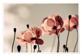 Poster Premium Poppy Meadow