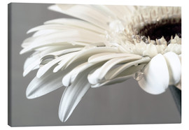 Susanne Herppich - White Gerbera with drops